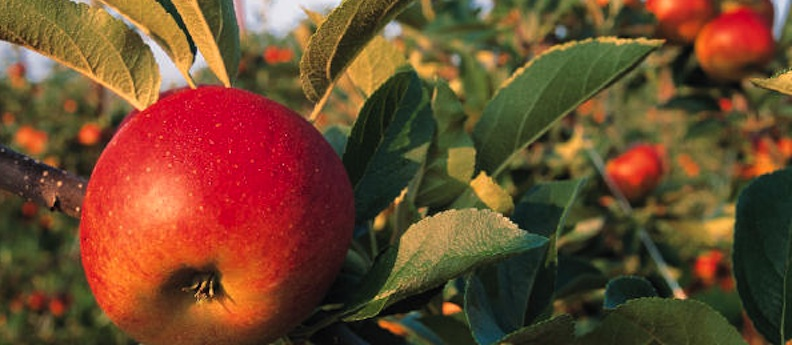 Everyday Miracles: What Looking the Mirror Can Teach Us Fruit