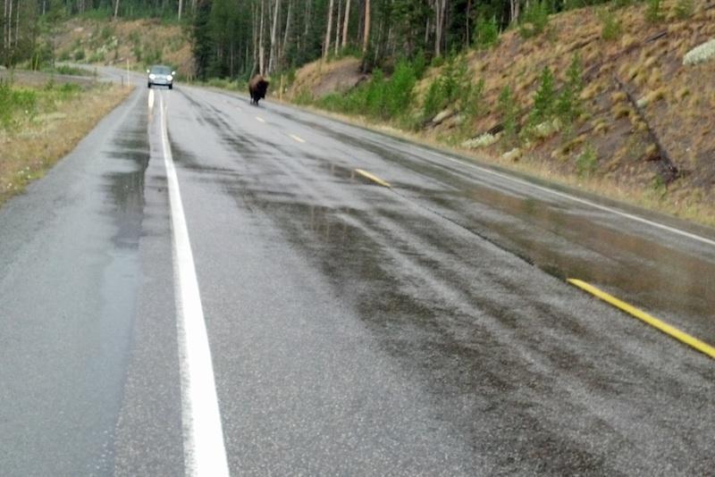 Reader Stories My Motorcycle Trip of a Lifetime bison on raod