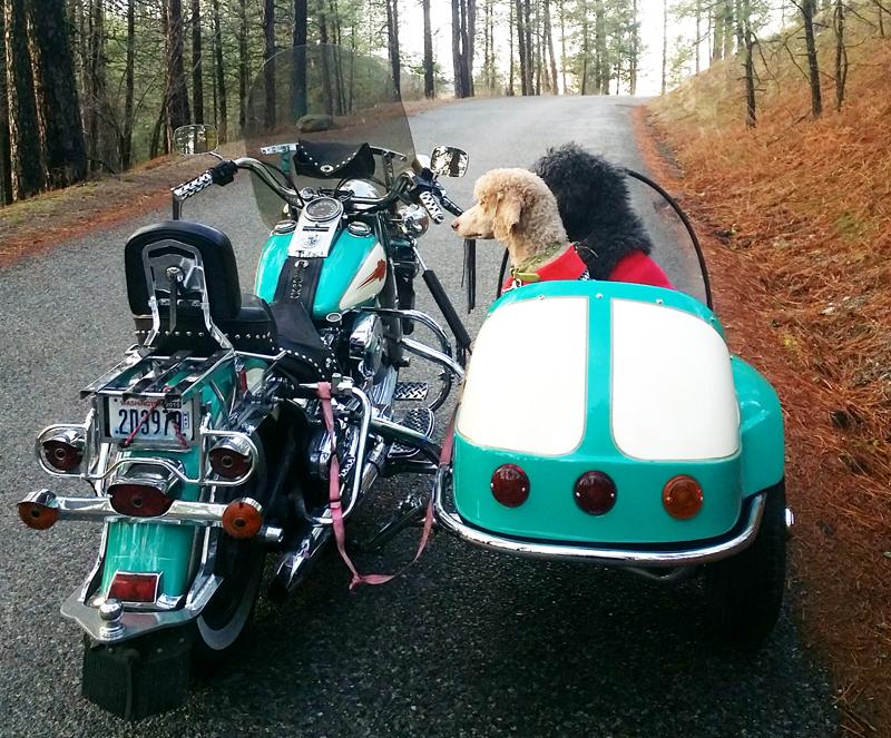 your motorcycles maryann duffeys doggie sidecar maryann duffey
