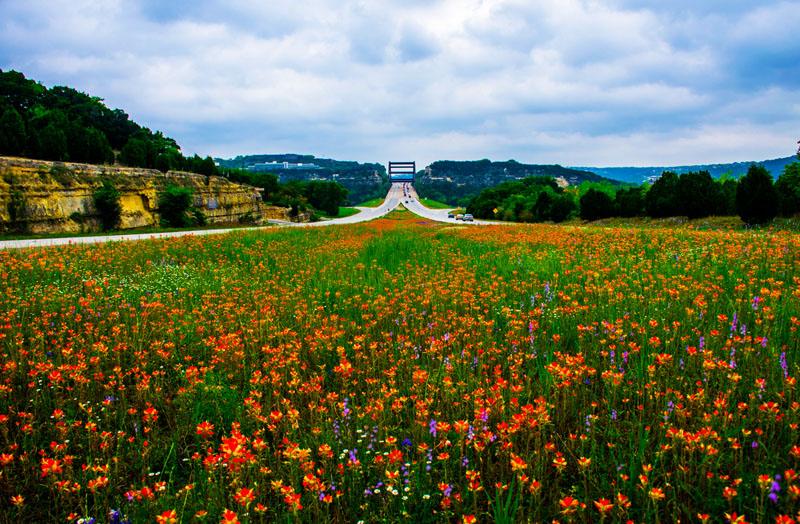 revved up women expo texas wildflowers